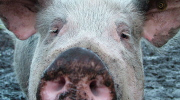 Important Innovation … or Lipstick on a Pig? 3 Questions to Ask to Decide Which Ideas to Keep and Which to Toss